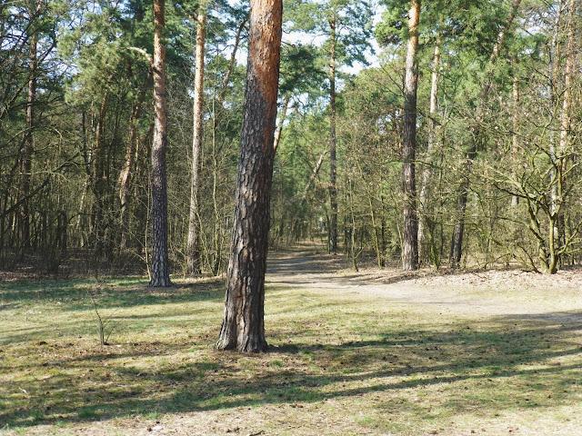 Lasek przy Dworku w Otwocku, Ulica Chrobrego.
