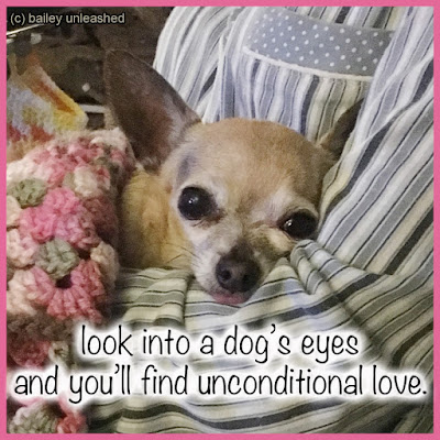look into a dog's eyes and you'll find unconditional love