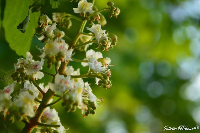 Fleur au parc de la tête d'or à Lyon