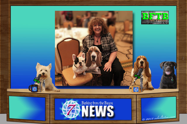 BFTB News desk with dogs and Manny the Frenchie