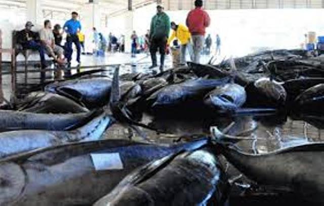 Direvisinya Izin Kapal Pengangkut Ikan, Pengusaha Budidaya Ikan Enggan Ekspor akibat Rugi