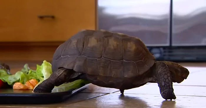 Woman And Her Pet Tortoise Have Been Together For 56 Years