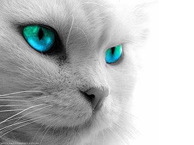 Blue Green Shade Cat eyes Wallpapers