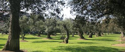 Bosque del Olivar San Isidro, bosque de los olivos, San Isidro