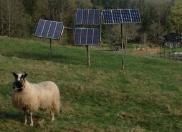 sheep and solar panels at River Farm