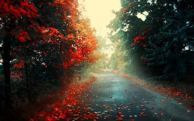 Calle con arboles y flores naranjas