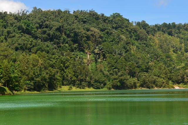 rombongan burung Danau Linow, Tomohon, Sulawesi Utara +jelajahsuwanto