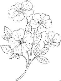 Malvorlagen Blumen Gratis X Claudia Schiffer