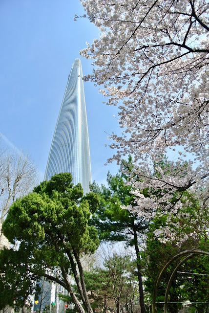 south korea corée du sud cherry blossom sakura jamsil seoul lotte tower
