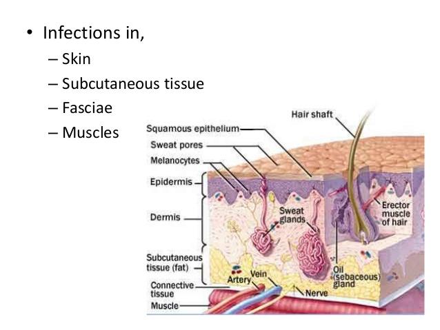 skin soft tissue