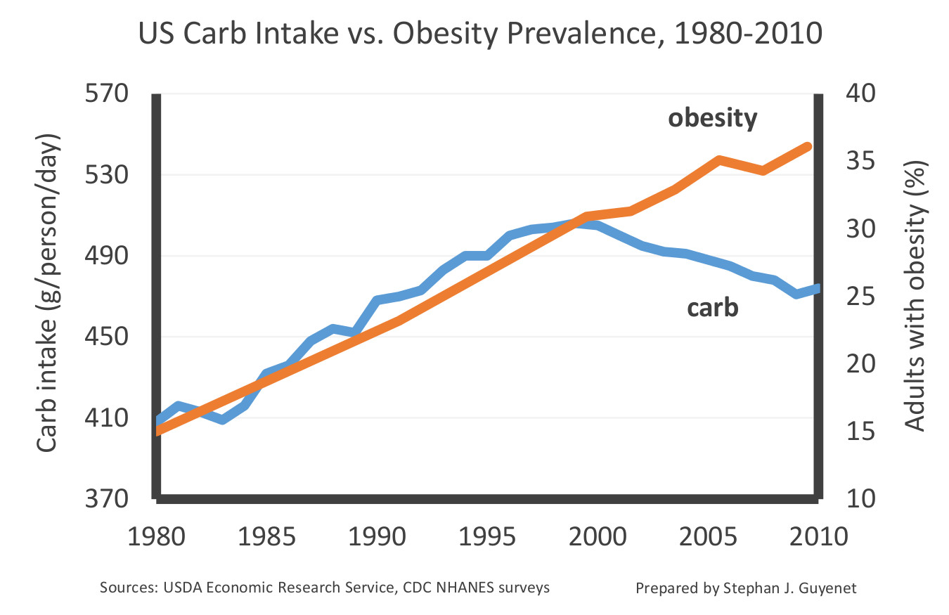 An introduction to the issue of obesity in todays society
