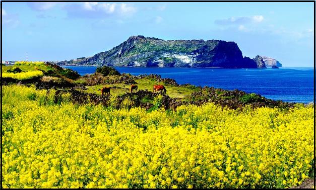tempat wisata di korea selatan pulau jeju