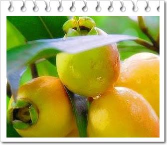 manfaat jambu mawar alias jambu kraton untuk kesehatan
