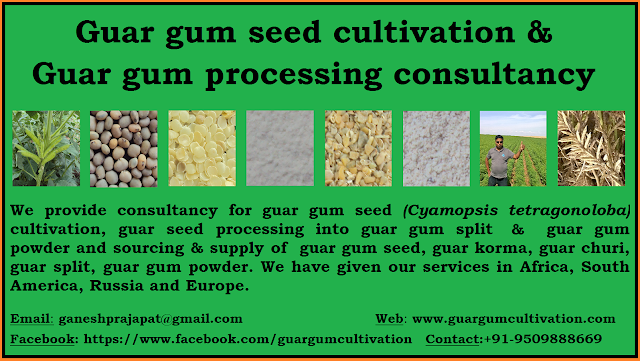 guar seed and gaur gum cultivation consultant and consultancy services