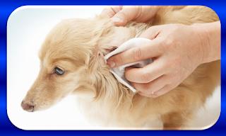 posso usar lenco umedecido de bebe em cachorro