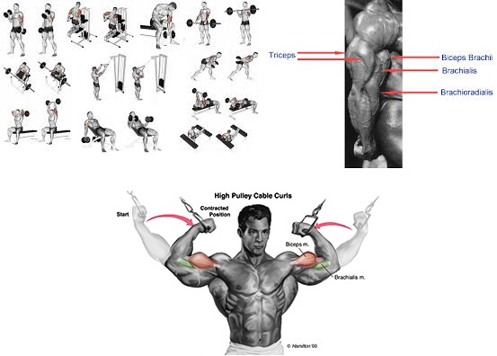 Get Great Guns & 7 Steps To Build Bigger, Better Arms
