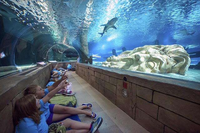 Best Aquariums in the USA: SEA LIFE Minnesota Aquarium