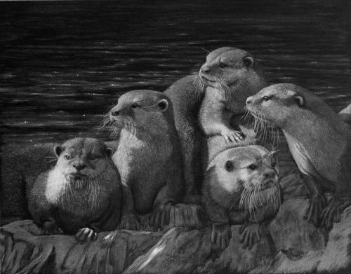 08-Otter-s-Life-on-the-Rocks-Lorna-Hannett-Animals-Drawings-Scratched-out-of-Ink-with-the-Scratchboard-www-designstack-co