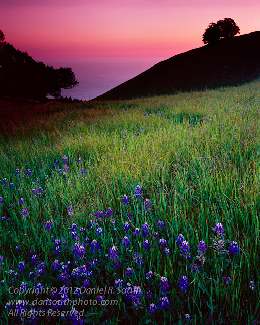a large format photograph of california wildflowers at sunset