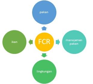 Fcr Food Convertion Ratio Rasio Konversi Pakan Dalam Perikanan