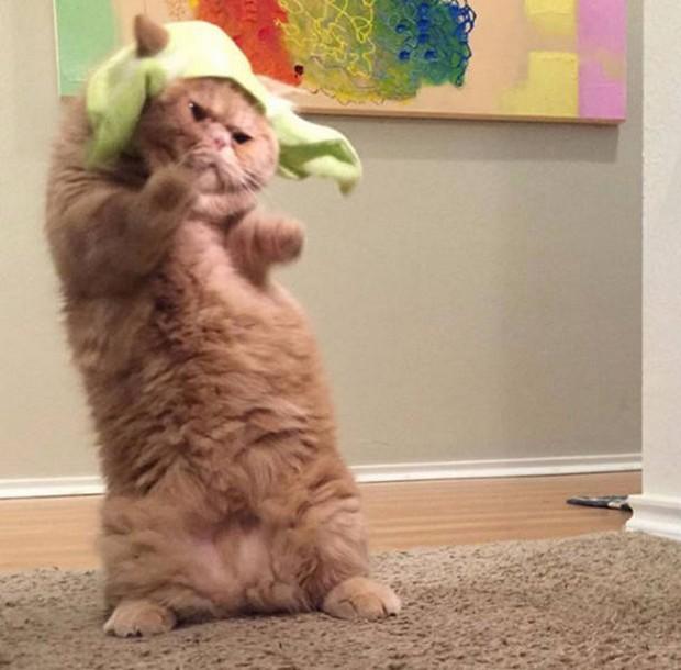 Прикольные и смешные коты (10 фото)