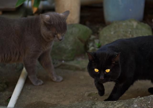 あいさつに来た猫の写真