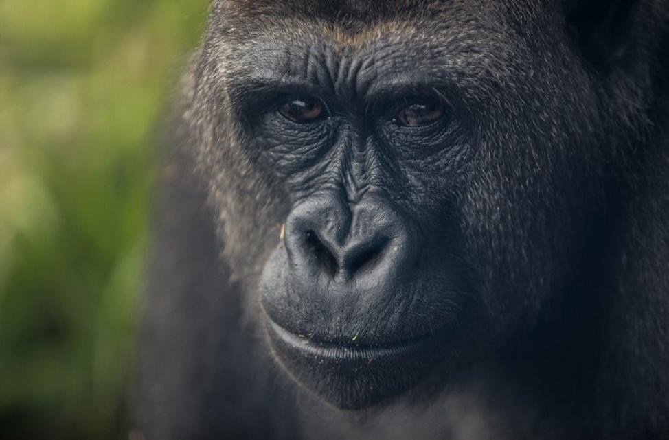 ALFI Foundation Fights For Endangered Wildlife