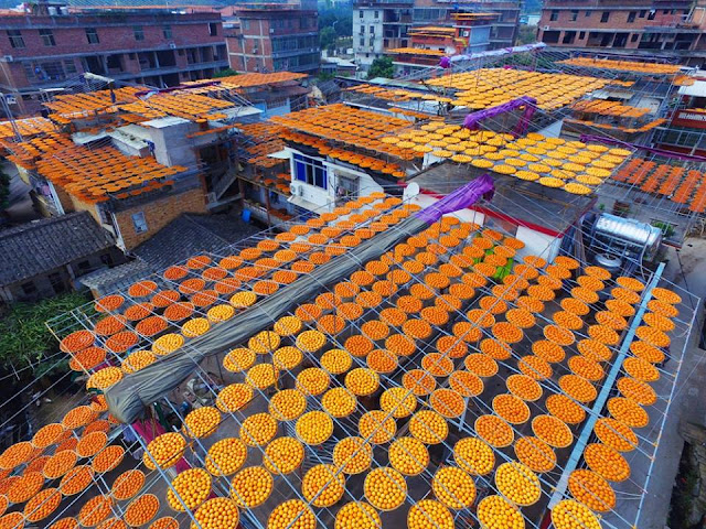 "Striking images of ""lucky"" seasonal fruit drying in the sun."