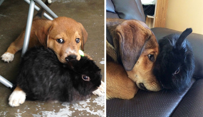 #15 Still Best Friends - 15 Before & After Pics Of Animals Growing Up Together