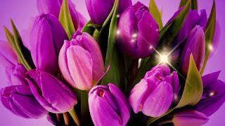 Цветок имени Раиса - тюльпан