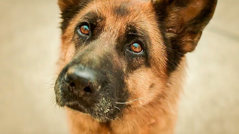 A Dog Named Palma (2021)
