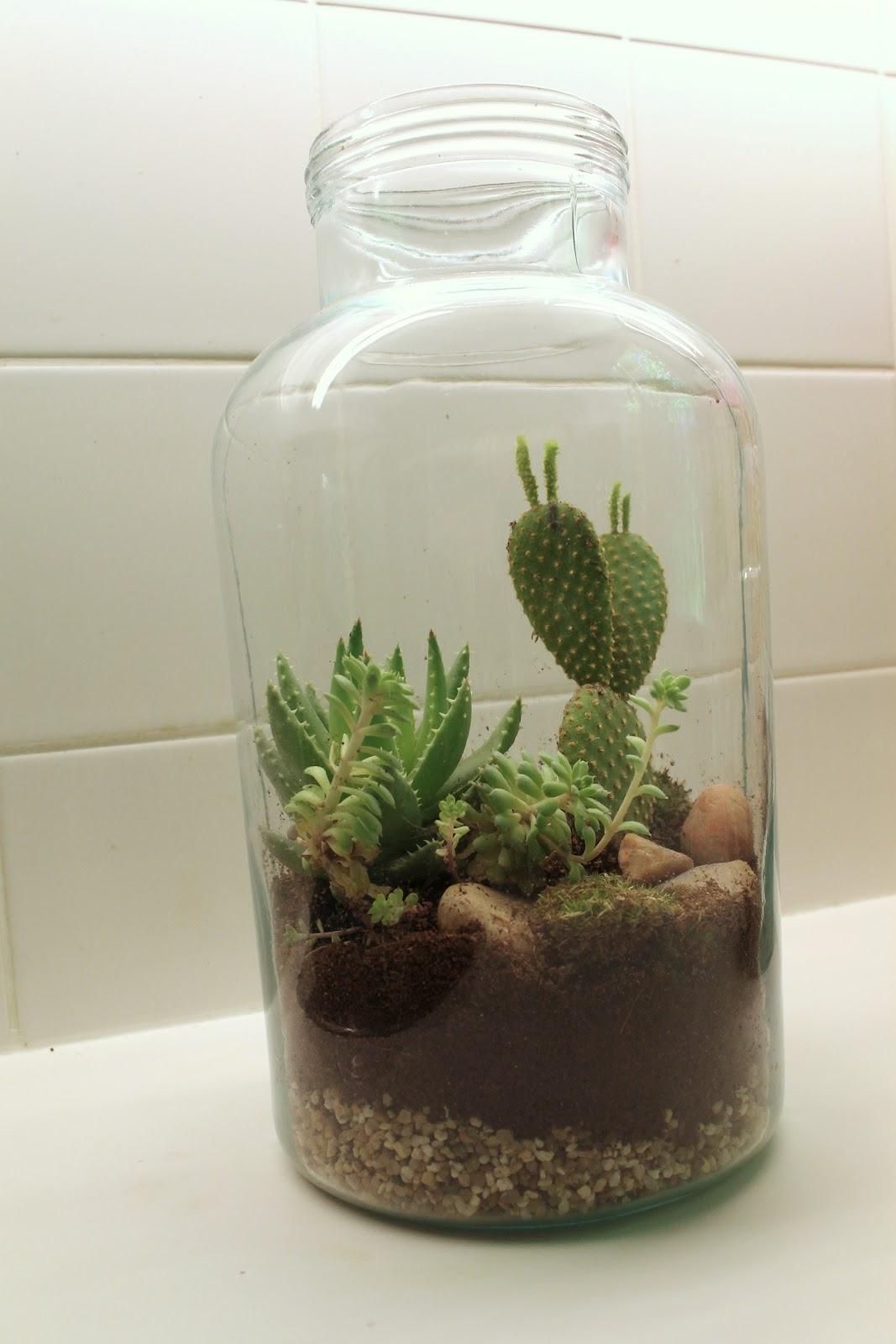 charlottenmarotten diy terrarium im glas. Black Bedroom Furniture Sets. Home Design Ideas