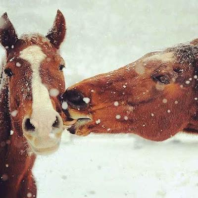 Imagenes de caballos: tierna imagen de dos caballos