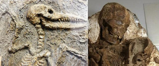 Fosil Nedir? Hakkında Bilgi