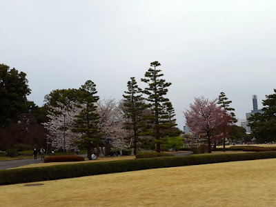 10D9N Spring Japan Trip: Hanami at the East Gardens of Imperial Palace, Tokyo