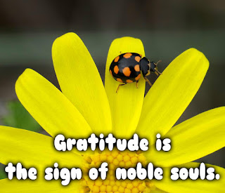 gratitude quotes, appreciation messsages