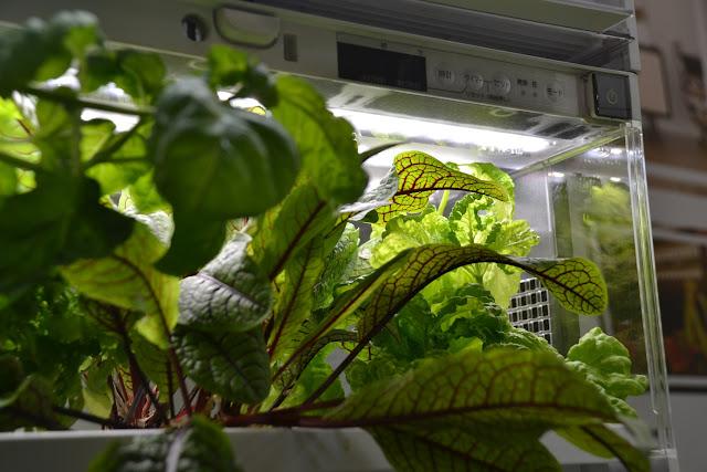 hydroponiczny ogrod warzywny