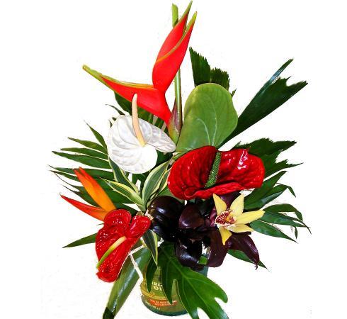 love fleurs exotiques photos. Black Bedroom Furniture Sets. Home Design Ideas