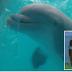 Os golfinhos gostam de assistir ao Bob Esponja