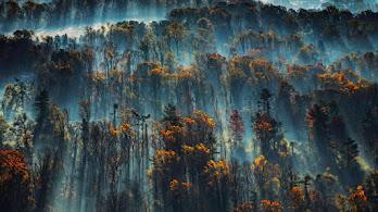 Forest, Morning, Mist, Scenery, 4K, #4.2326