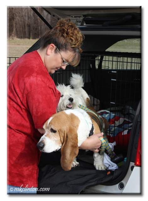 Bentley Basset Hound gets lifted out of his kennel while Pierre Westie waits