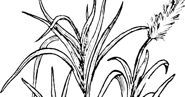 Sugarcane Plant Worksheet ~ Kindergarten Worksheet Guide