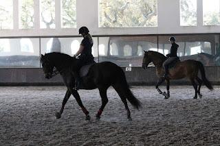Portugal, Riitta Reissaa, Horsexplore, Avis, ratsastusmatka