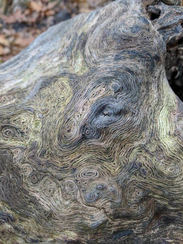 20 Pictures Prove That 'Accidental' Art Can Be Astonishing - The Swirls On This Log