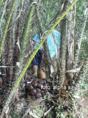 wisata agro lumajang