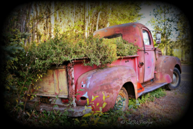Stacy Petersen Photography - Ford Truck