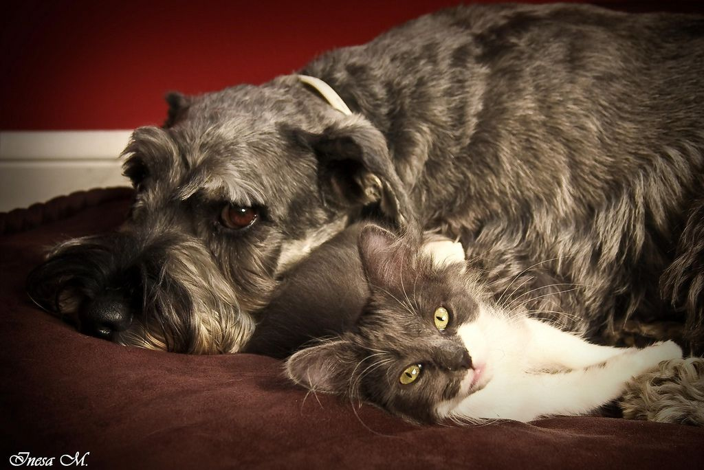 14. Who said that the dog and the cat can't be friends