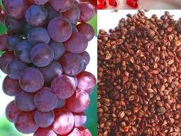 Vita-E Shaklee mengandungi ekstrak biji anggur yang kaya dengan antioksidan