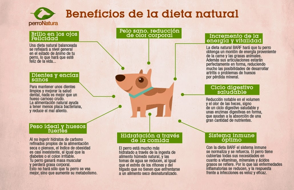 Perdida de peso dieta barf para perros