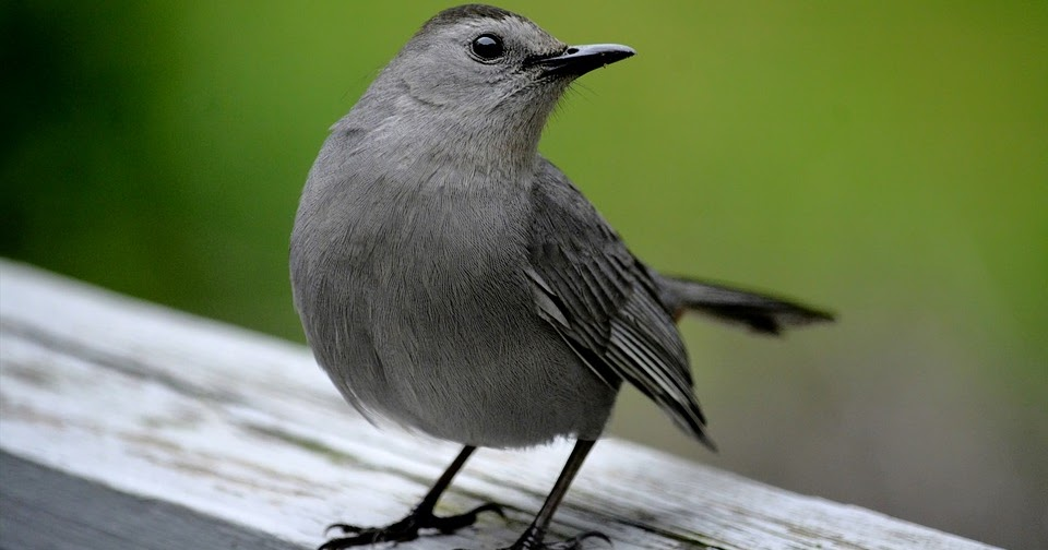 #FeedtheBirds 1: Bird that sounds like a baby crying